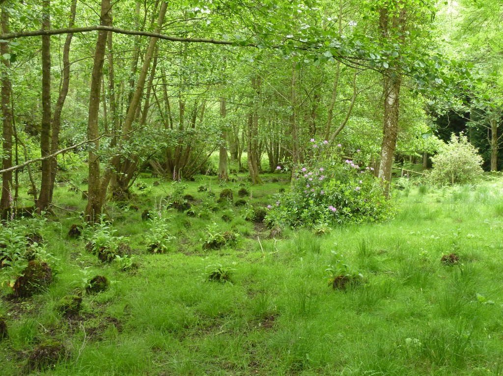 Green Wareham Forest