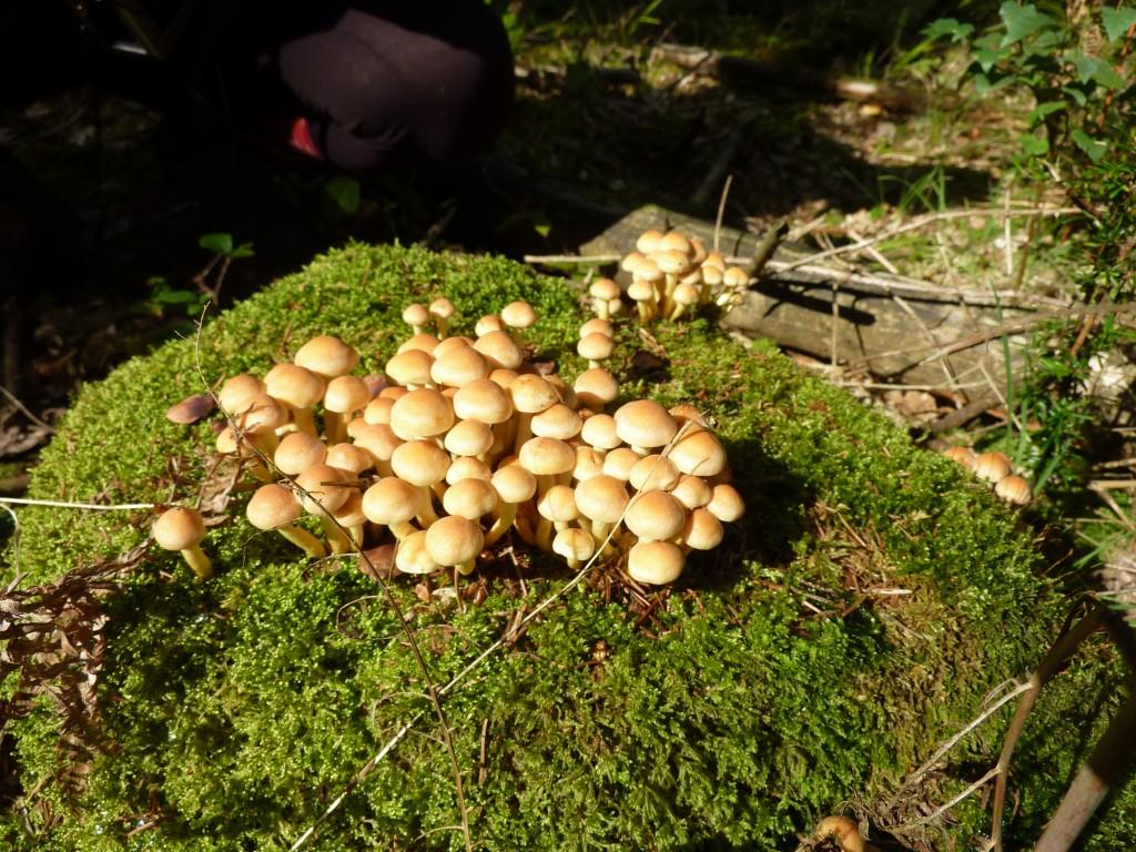 Fungi in Ampfield Wood