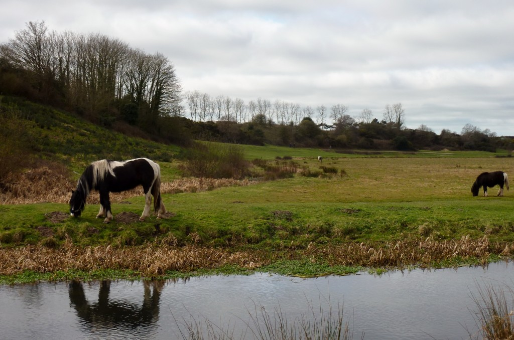 Reflective horse beneath Wareham walls walk