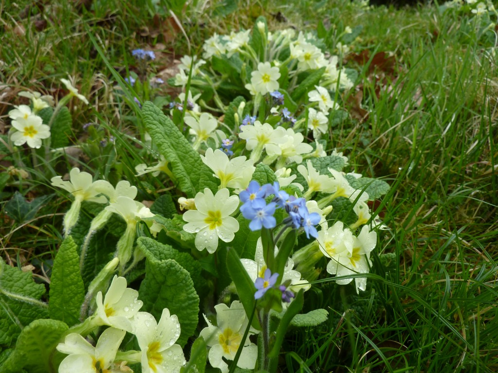 Floral verges of Knapp