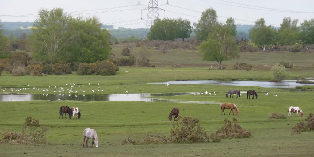 Pretty Plaitford Common