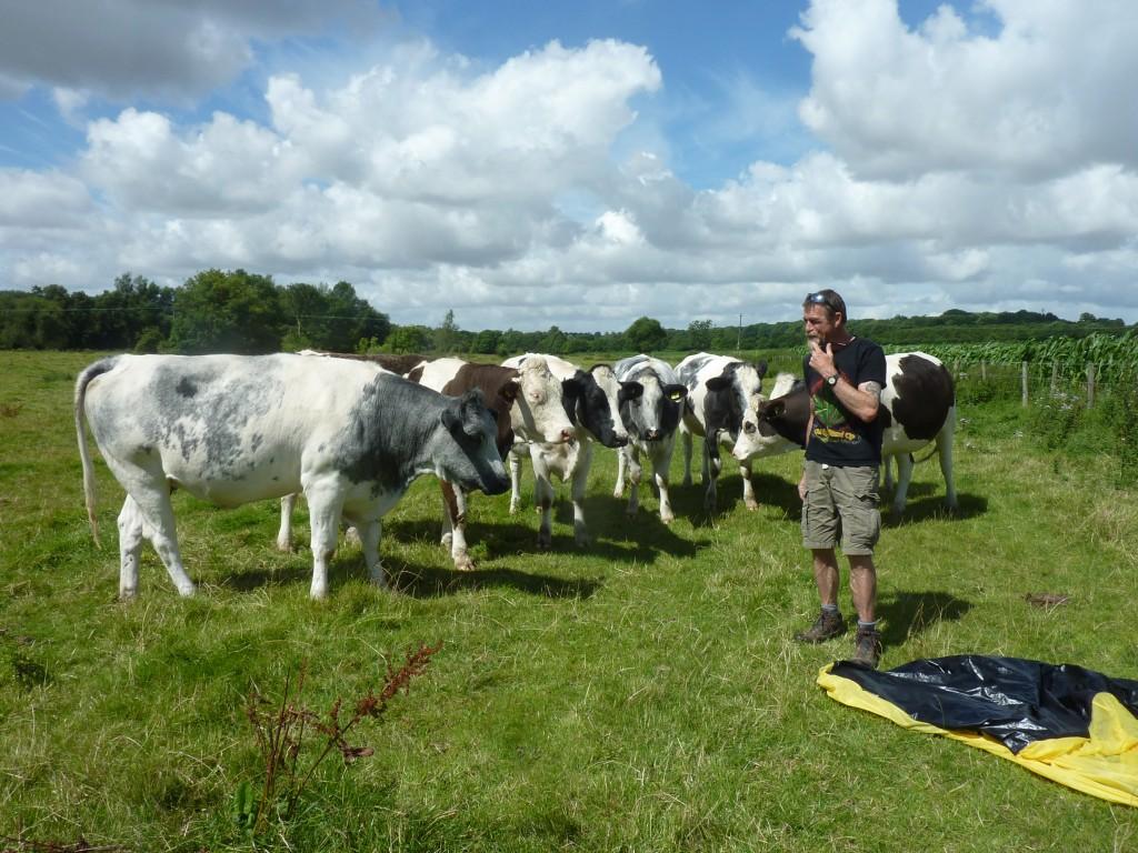 Hodge v cows
